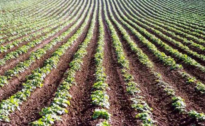 Image Processing for Precision Agriculture