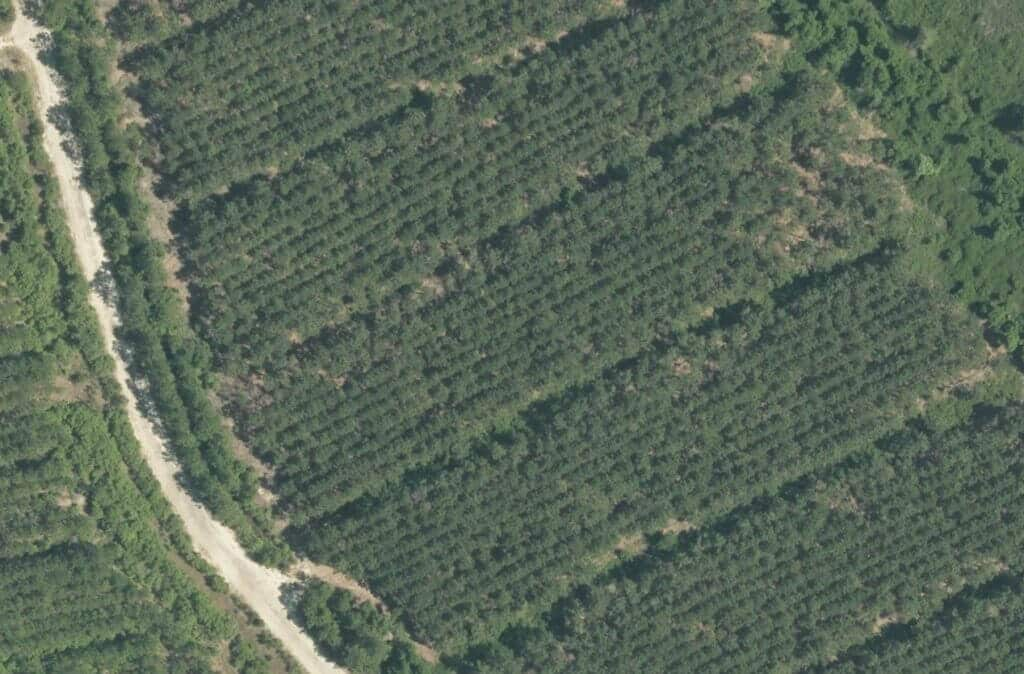 automatic forestry detection and recognition