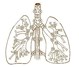 Pulmonary Lymph Nodes detection
