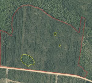 two detected areas of missing trees