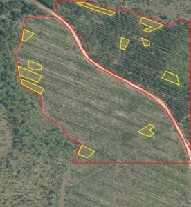Detection of forest regions without trees