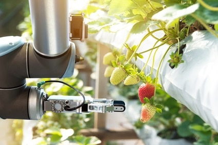 Robots for handling fruits
